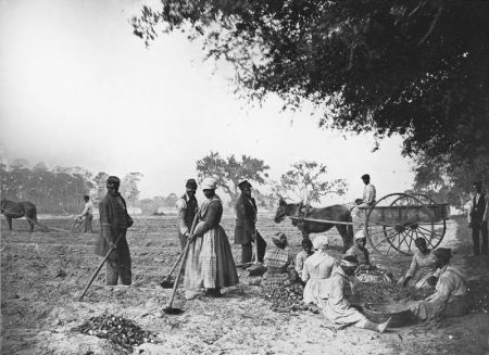 800px-James_Hopkinsons_Plantation_Slaves_Planting_Sweet_Potatoes